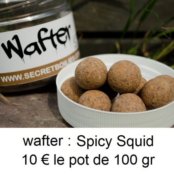wafter squid